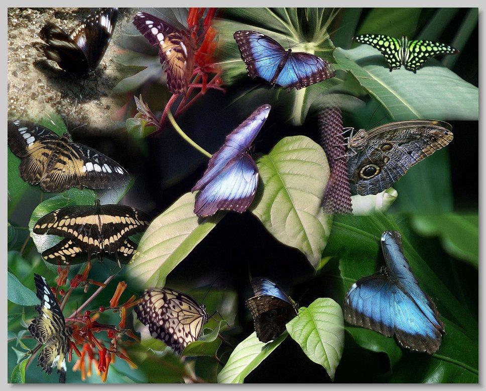 Alaska Trip   Victoria   Victoria Butterfly Gardens Collage